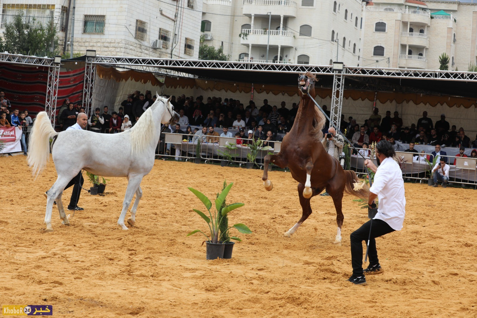 مسابقة جمال الخيول العربيةالاصيلةبمشاركة عشرات الخيول في فلسطينوالتي اقيمت بالخليل