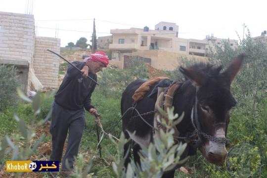 خالد العبد الله عاشق للأرض ومتمسك بمهنة الأباء والأجداد رغم الإعاقة