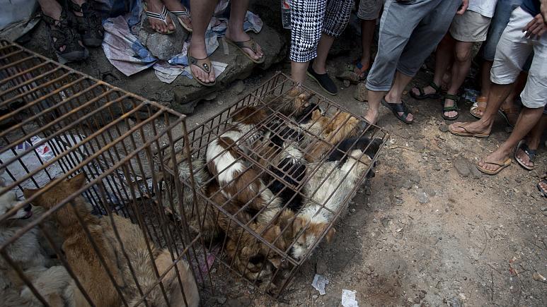 منظمة الصحة تحث الدول على تعليق بيع الحيوانات البرية الحية  بالأسواق