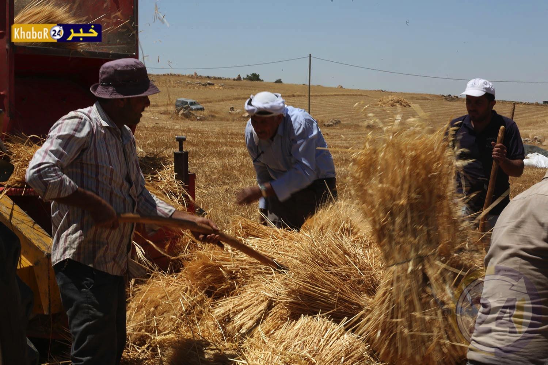 بالفيديو : موسم حصاد الذهب الأصفر من بيادر فلسطين