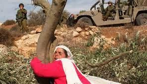 هيئة مقاومة الجدار والاستيطان تصدر بيان بمناسبة يوم الارض الخالد